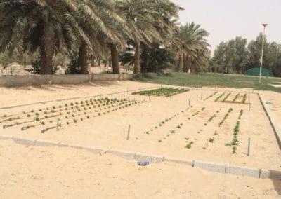 Mars en Arabia Saudita – Reutilización del Agua